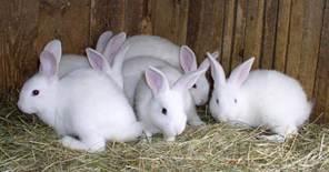 conill ecologi