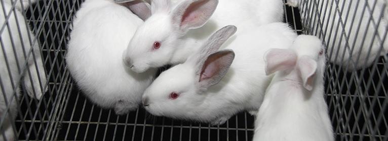 Conejos Upa